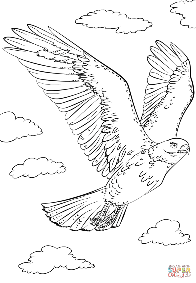 how to draw hawk wings learn how to draw a ferruginous hawk bird of prey step how hawk wings draw to