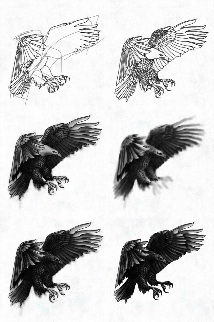 how to draw hawk wings pin by susan carrell on how to draw eagles eagle tattoos draw how to wings hawk