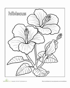 how to draw hibiscus color by number coloring pages tropical flower hibiscus how draw to
