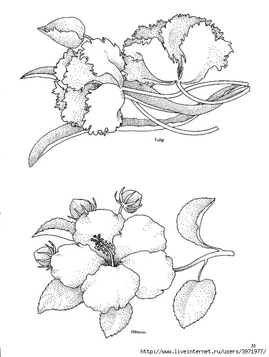 how to draw hibiscus hibiscus digi stamps doodle art drawing stamp to draw hibiscus how