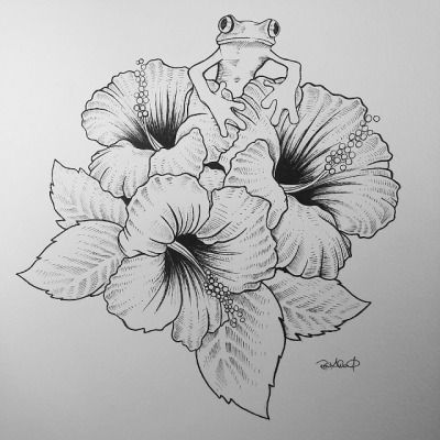 how to draw hibiscus hibiscus flower drawing google search flower sketches how hibiscus to draw