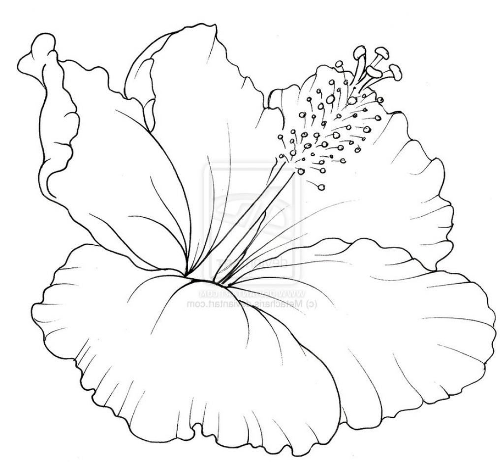 how to draw hibiscus hibiscus flower drawing step by step at getdrawings free draw to hibiscus how