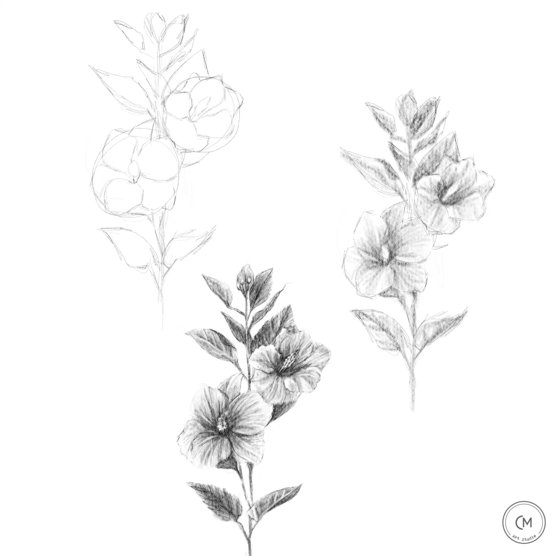 how to draw hibiscus how to draw a flower hibiscus drawing skills sketch how to draw hibiscus