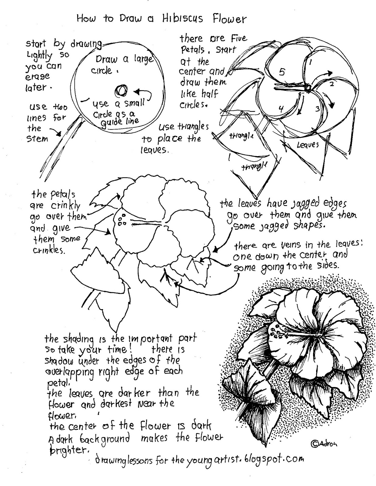how to draw hibiscus how to draw a hibiscus flower step by step drawing draw how hibiscus to