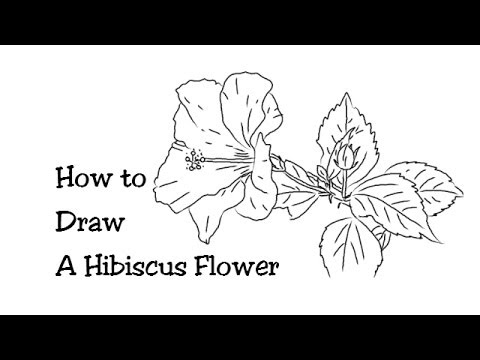how to draw hibiscus how to draw a hibiscus step by step flowers pop culture draw to hibiscus how