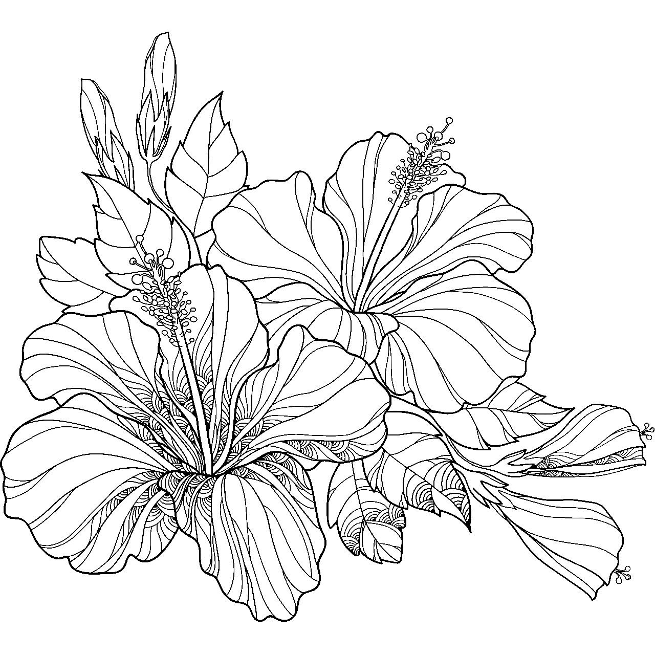 how to draw hibiscus pin by banndit1 on coloring flowers flower line drawings to how draw hibiscus