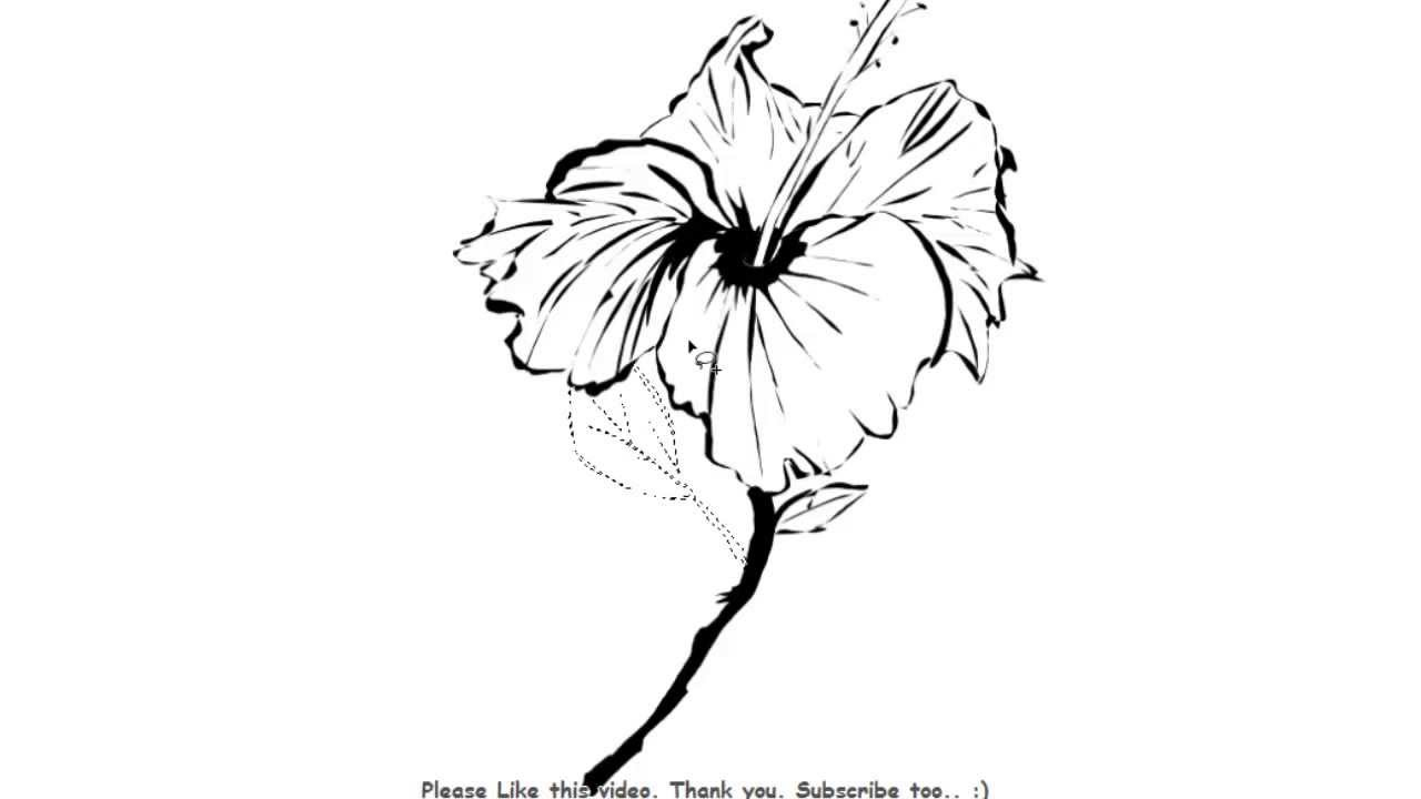 how to draw hibiscus simple hibiscus drawing at getdrawings free download to draw how hibiscus