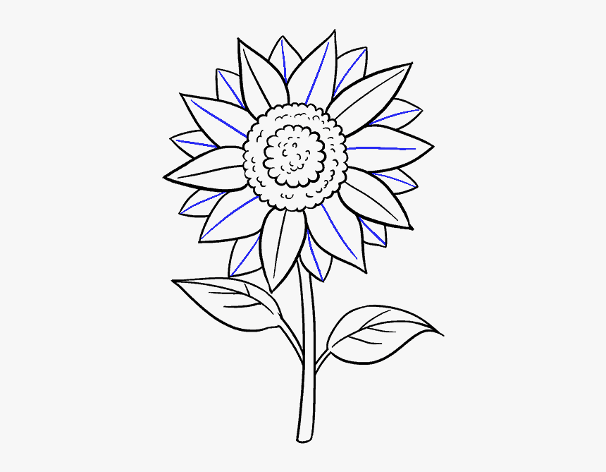 how to draw sunflowers best sunflower drawings images in 2020 sunflower drawing how sunflowers draw to