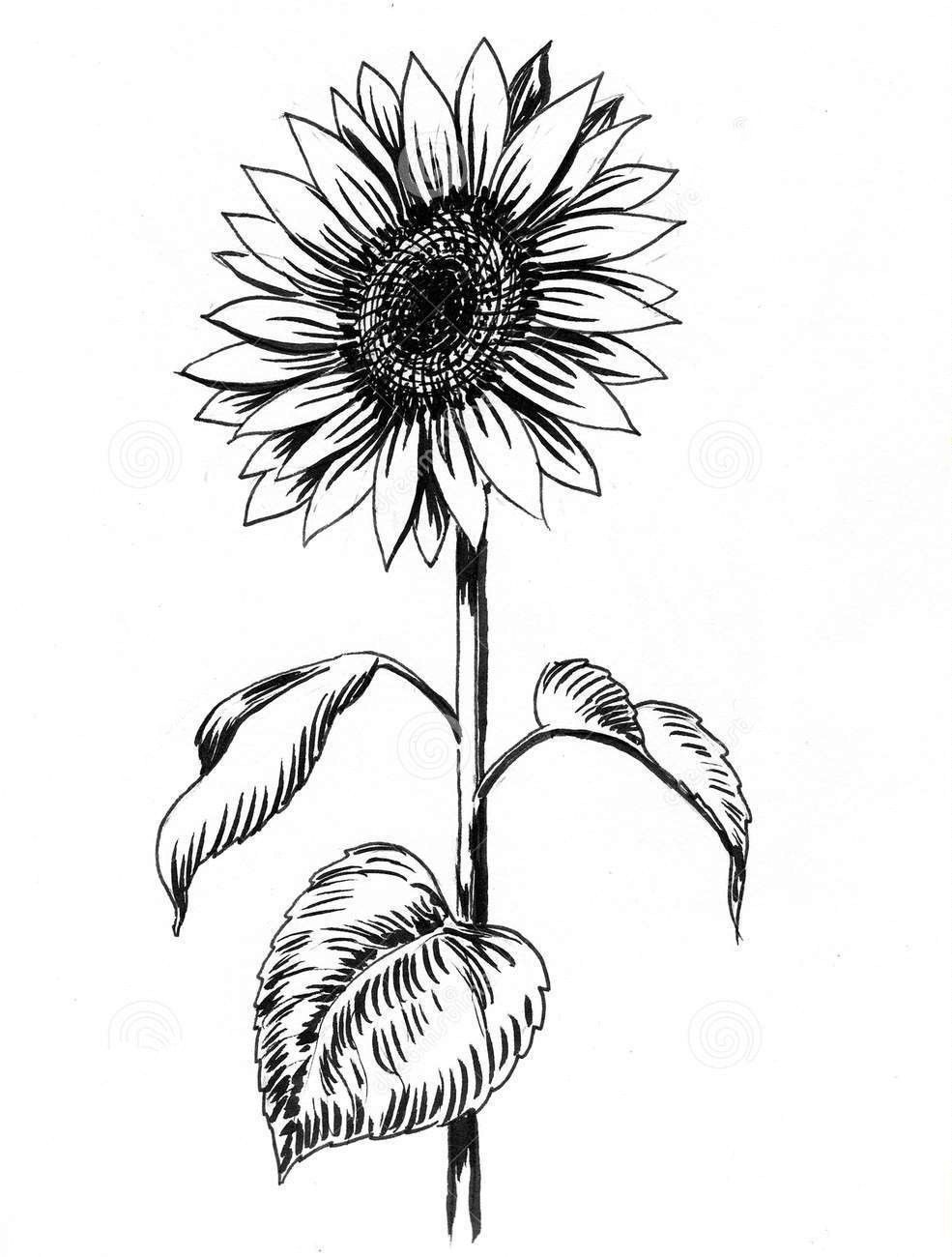 how to draw sunflowers how to draw a sunflower really easy drawing tutorial to draw sunflowers how