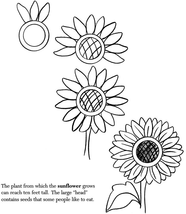 how to draw sunflowers how to draw a sunflower step 4 sunflower drawing how to draw sunflowers