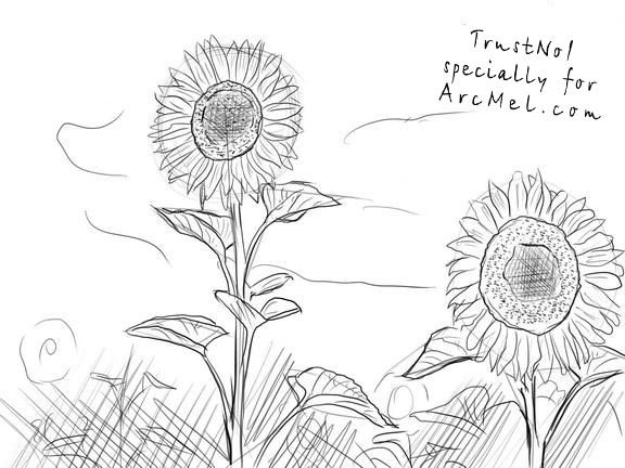 how to draw sunflowers how to draw sunflowers draw to how sunflowers