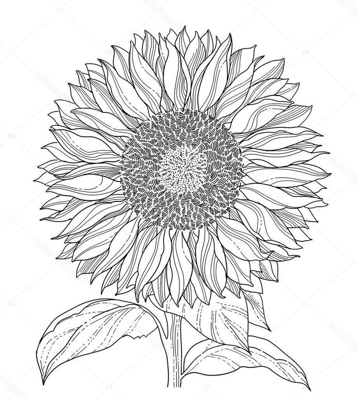 how to draw sunflowers i love sunflowers this line drawing will make a joyful sunflowers draw to how