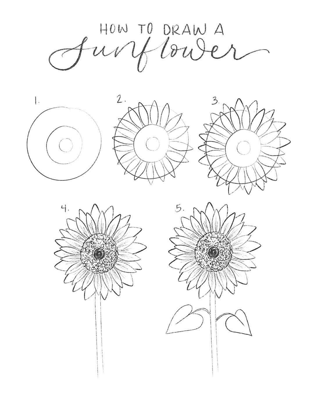 how to draw sunflowers simple sunflower drawing at getdrawings free download how draw to sunflowers