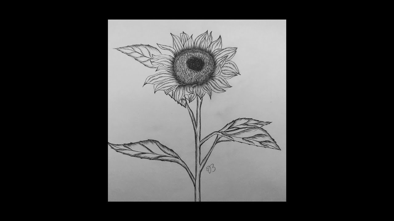 how to draw sunflowers sunflower cartoon drawing at getdrawingscom free for to sunflowers draw how