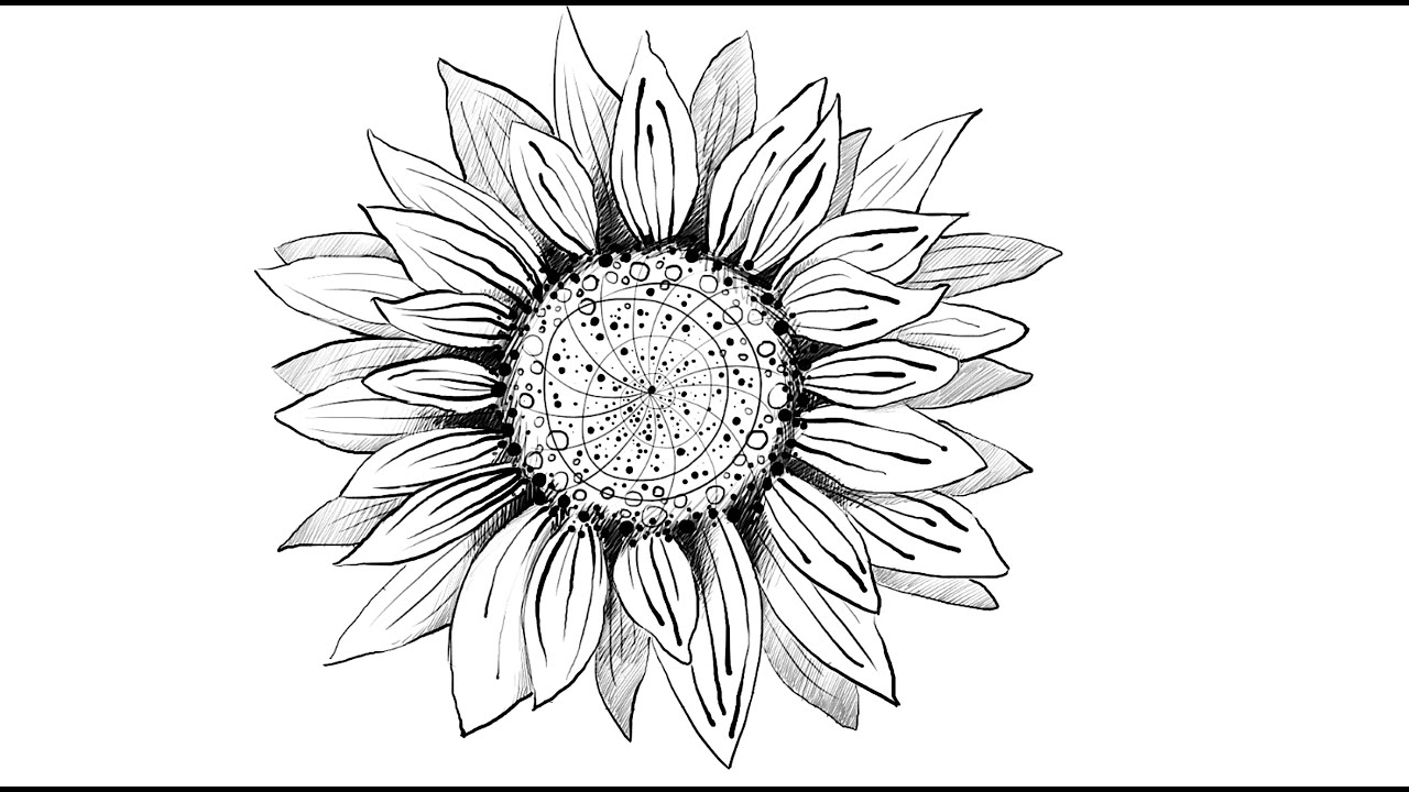 how to draw sunflowers sunflower doodle flower drawing tutorials sunflower to sunflowers draw how