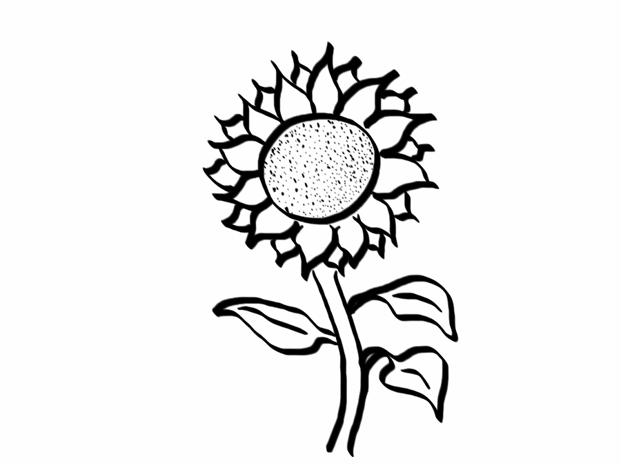how to draw sunflowers sunflower drawing for kid free download on clipartmag draw sunflowers how to