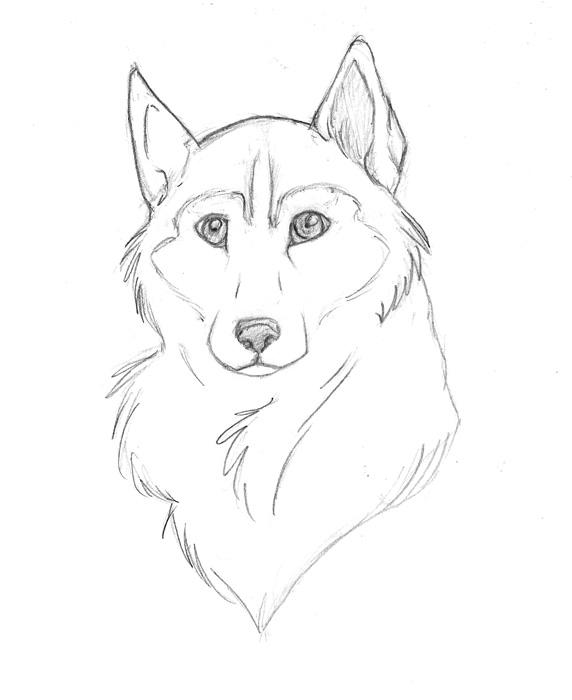 husky face coloring pages baby husky coloring coloring pages pages husky coloring face