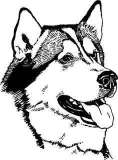 husky face coloring pages husky coloring pages free printable coloring pages for kids face husky coloring pages