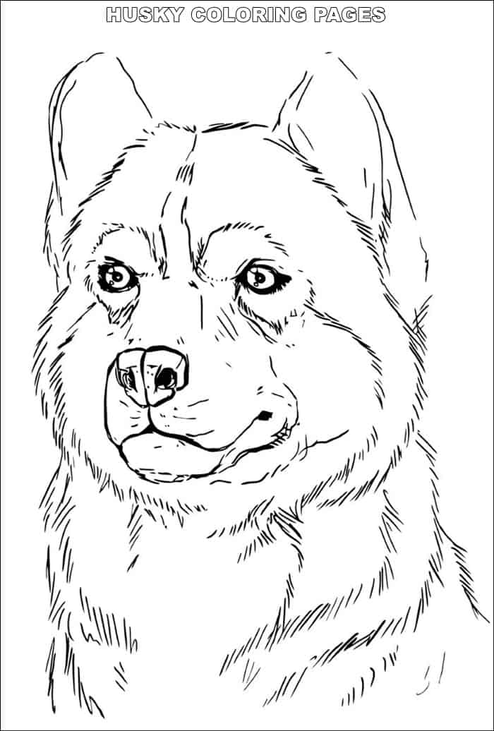 husky face coloring pages husky coloring pages malvorlagen malvorlagen tiere und husky coloring pages face