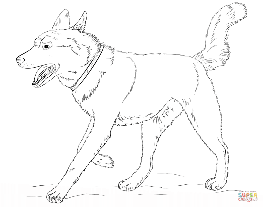 husky face coloring pages husky face coloring pages husky pages coloring face