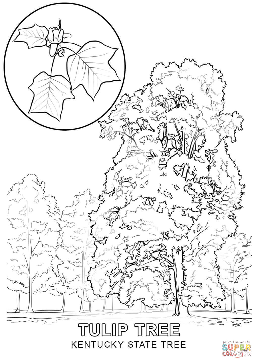 kentucky coloring sheets free printable coloring pages of the university of kentucky coloring sheets