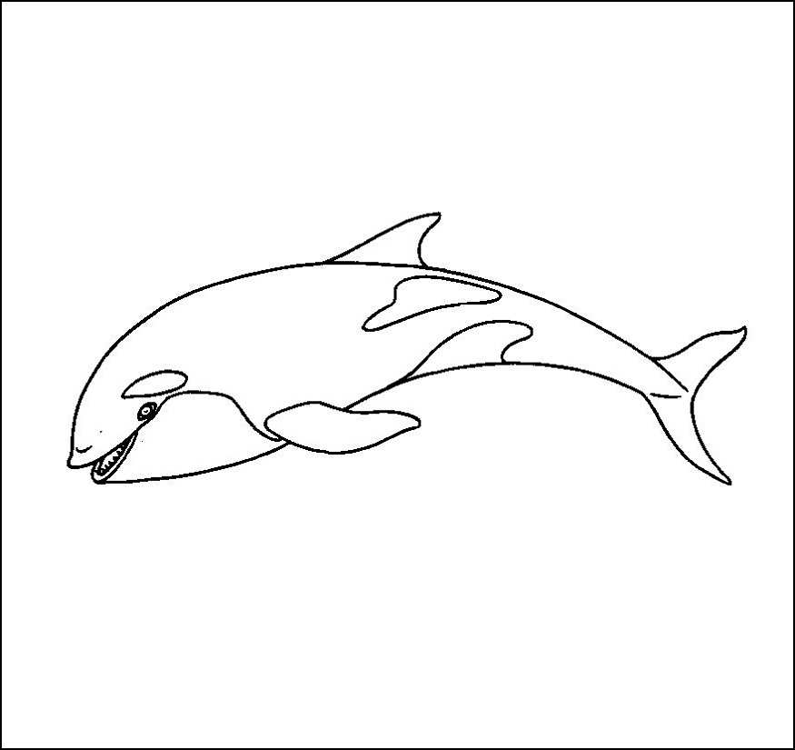 killer whale color killer whale coloring pages to download and print for free whale color killer 1 1