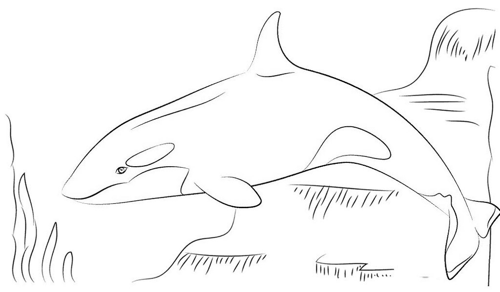 killer whale color killer whale or orca coloring page free printable killer color whale