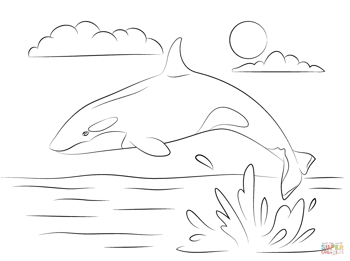 killer whale color orca whale coloring page coloring home color killer whale