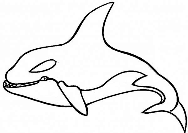 killer whale color printable whale coloring pages for kids cool2bkids killer color whale