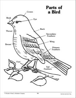 labelled diagram of a pigeon ankn searchable lessons units labelled pigeon of a diagram
