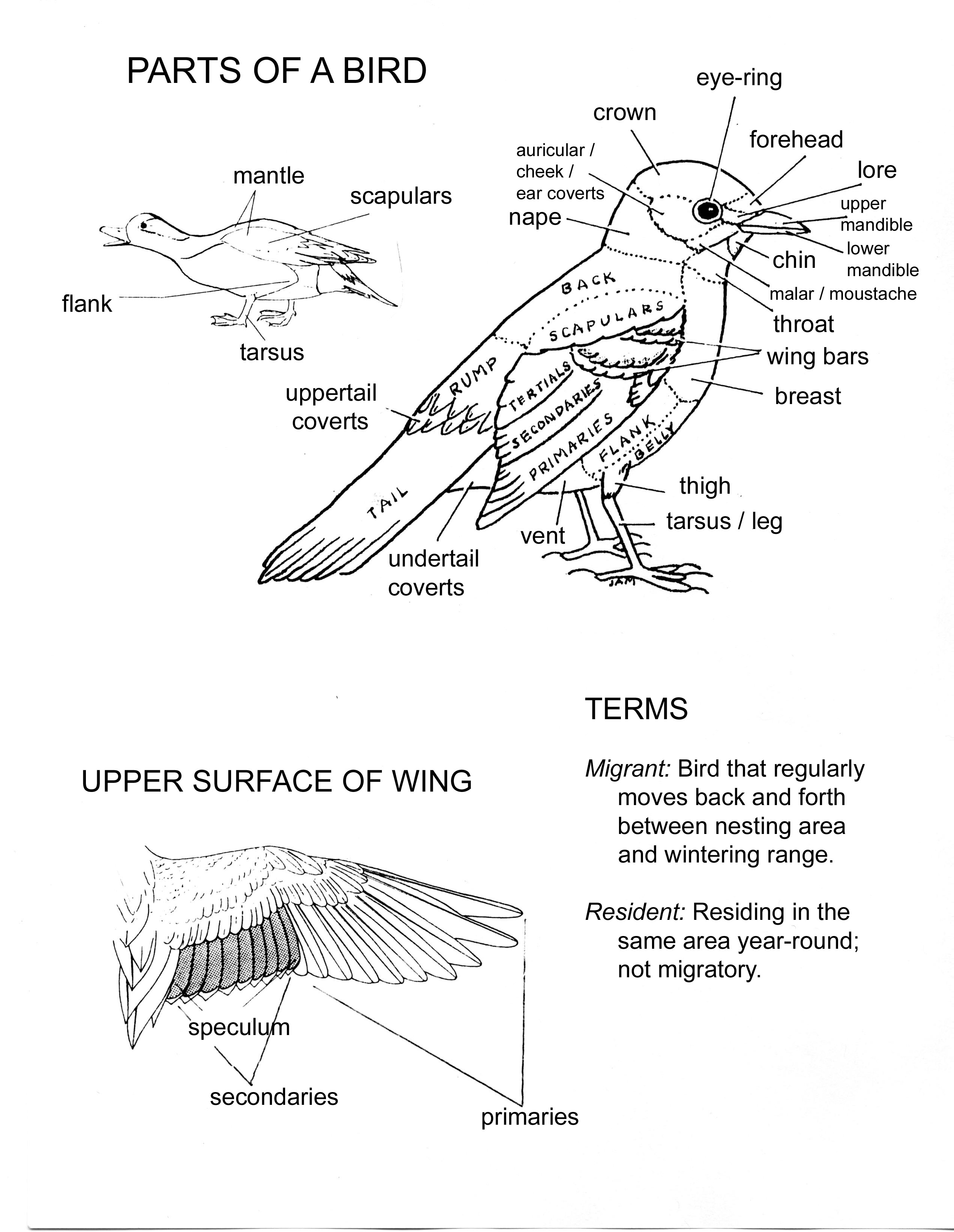 labelled diagram of a pigeon drawings from selected levels of frontal sections through a of pigeon labelled diagram