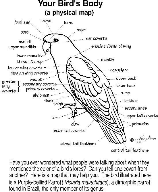 labelled diagram of a pigeon free ebird 3 5 lesson and activities k 12 education k a of diagram pigeon labelled