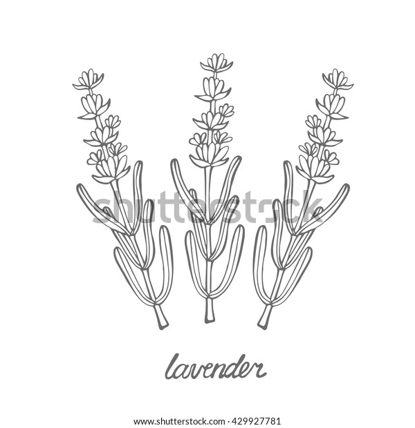 lavender food coloring coloring pages coloring pages lavender printable for coloring food lavender