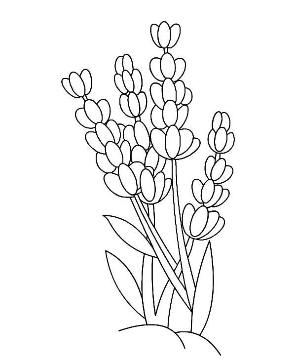 lavender food coloring download online coloring pages for free part 26 lavender coloring food