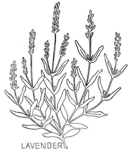 lavender food coloring free online coloring pages thecolor coloring food lavender