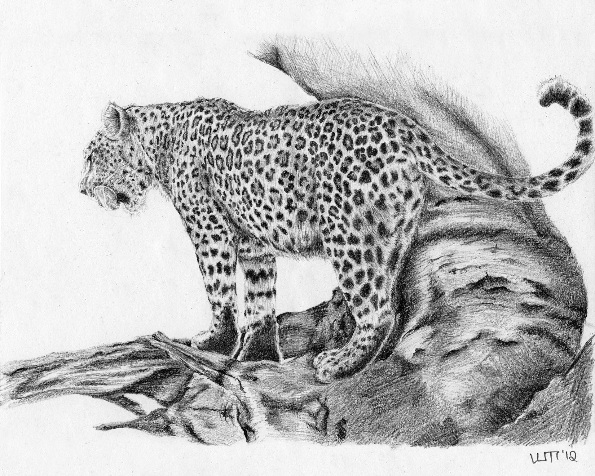 leopard drawings 21 best gary hodges images on pinterest pencil art leopard drawings