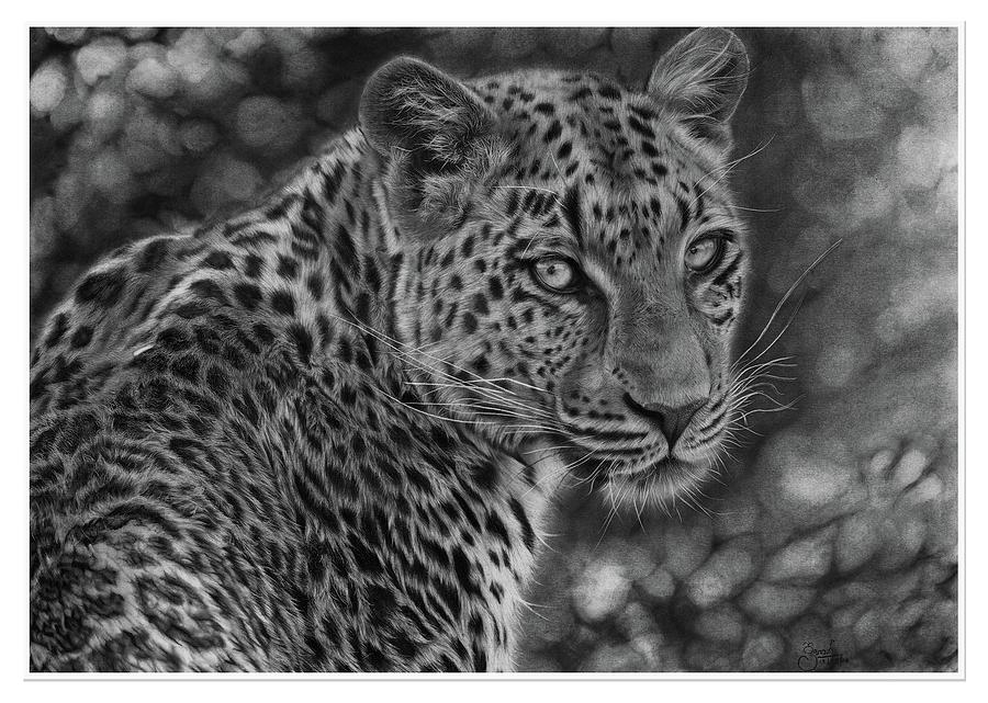leopard drawings baby leopard by cubistpanther on deviantart drawings leopard