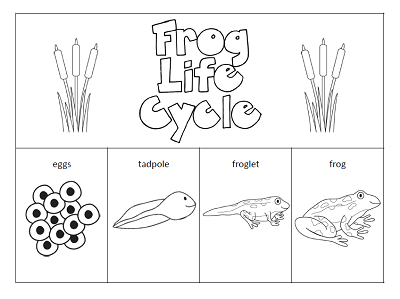 life cycle of a frog printable 31 best preschool theme frogs images on pinterest cycle life a frog printable of