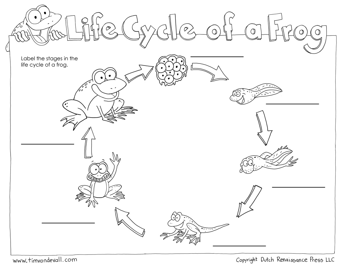 life cycle of a frog printable exploring science wonderland frog life cycle life cycle of frog printable a