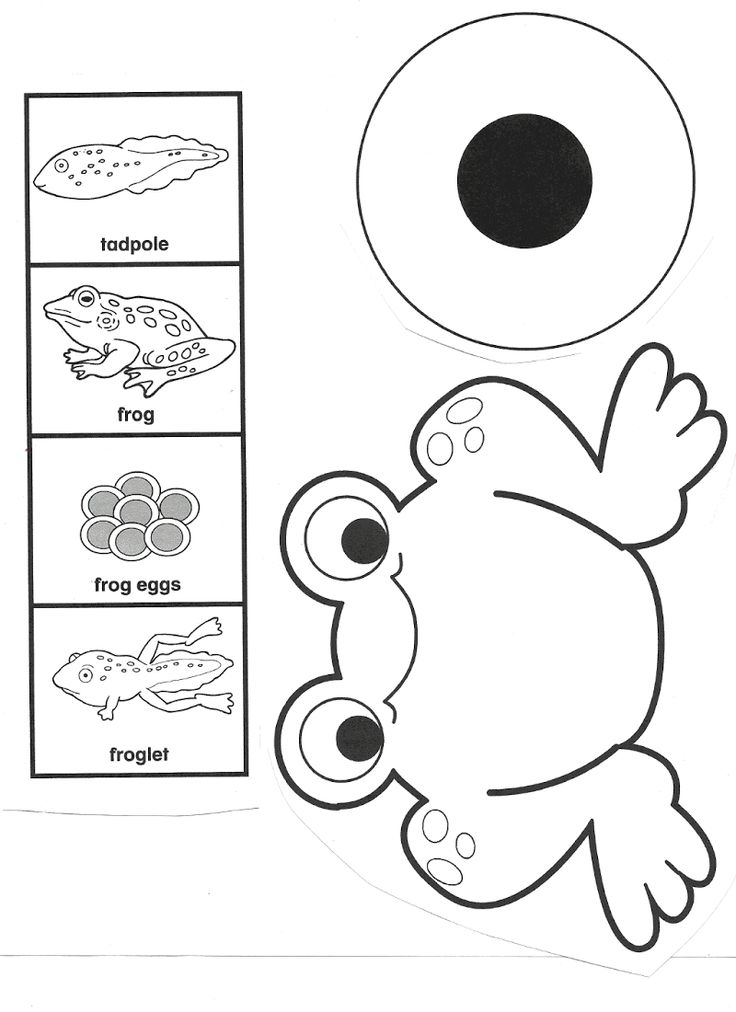 life cycle of a frog printable frog life cycle by jennifer hier at early learning ideas tpt printable frog a life cycle of
