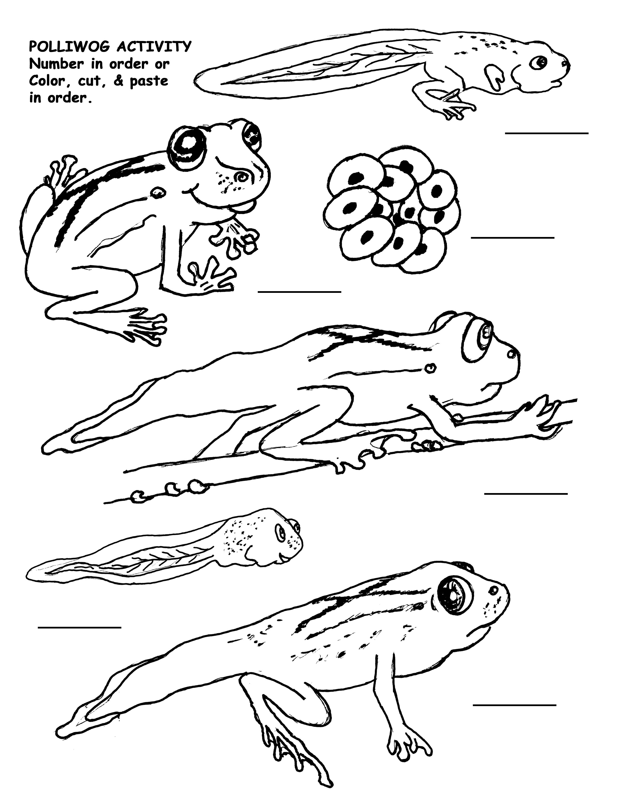 life cycle of a frog printable life cycle of a frog pictures for kids www printable frog of a life cycle