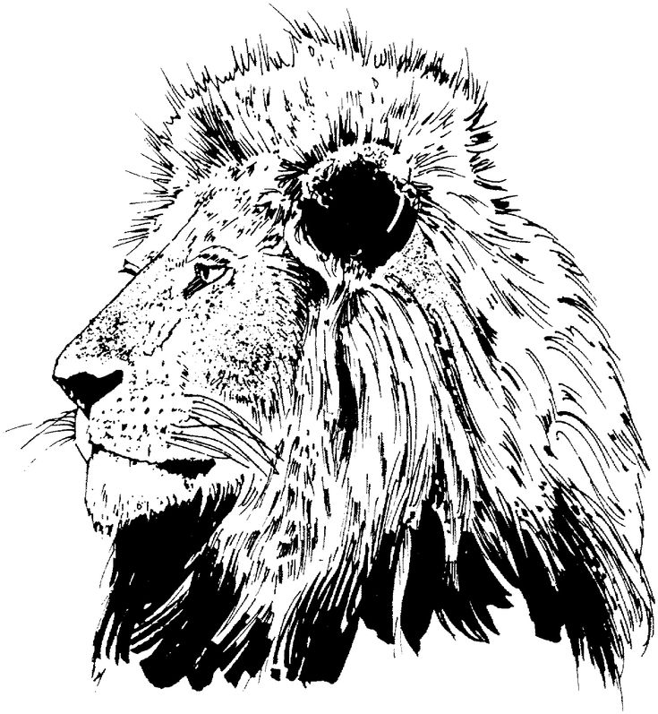 lion face coloring 11 best sunday school images on pinterest bible face lion coloring
