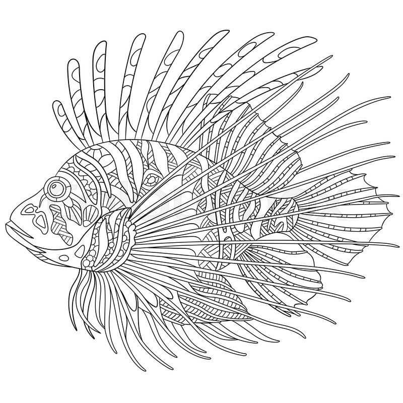 lionfish coloring page best zebrafish illustrations royalty free vector graphics coloring lionfish page