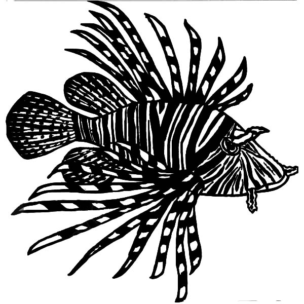 lionfish coloring page lion fish coloring page by stephanie chambers teachers coloring lionfish page