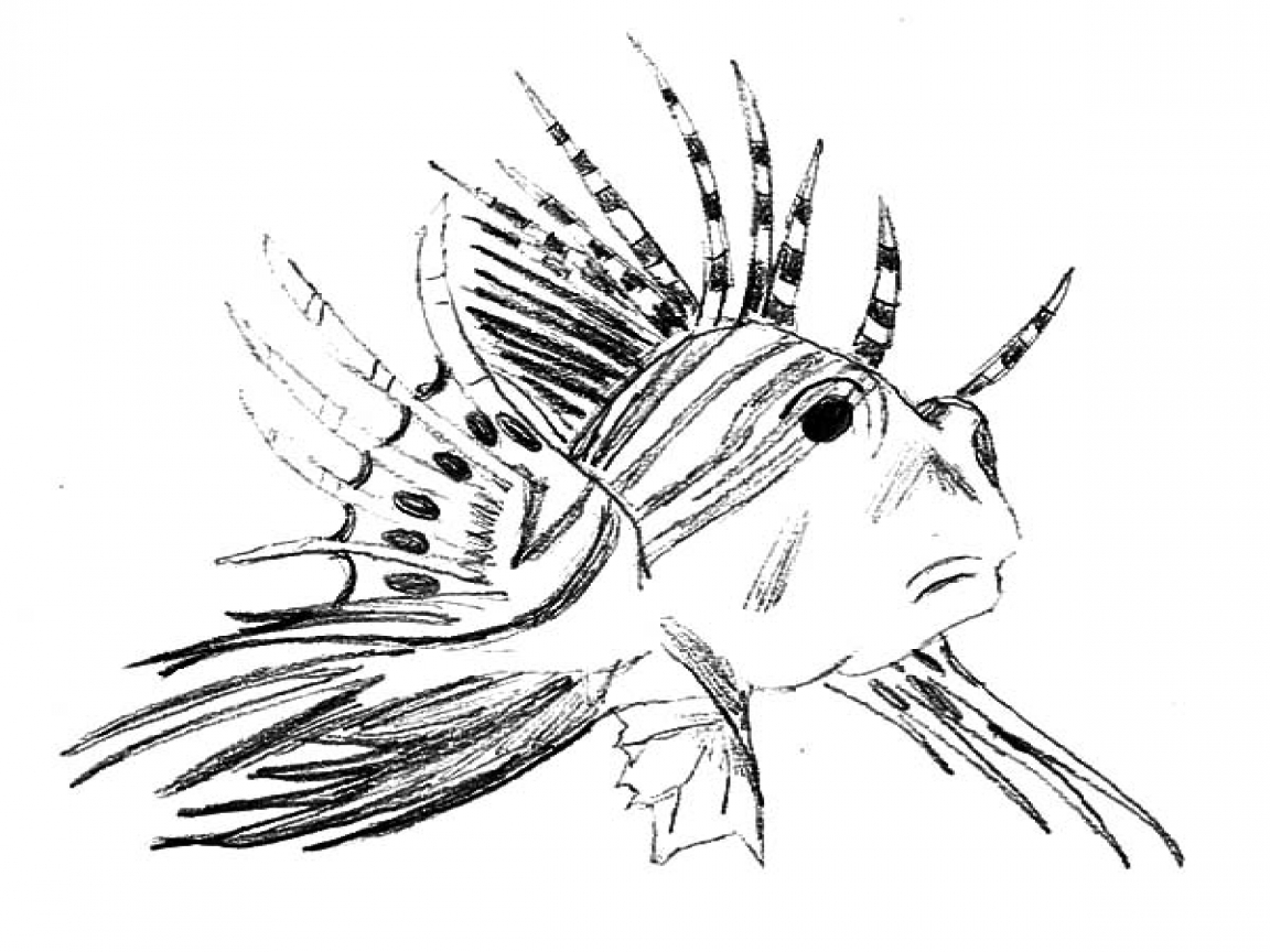 lionfish coloring page lionfish coloring page from dover coloring pages pinterest lionfish page coloring