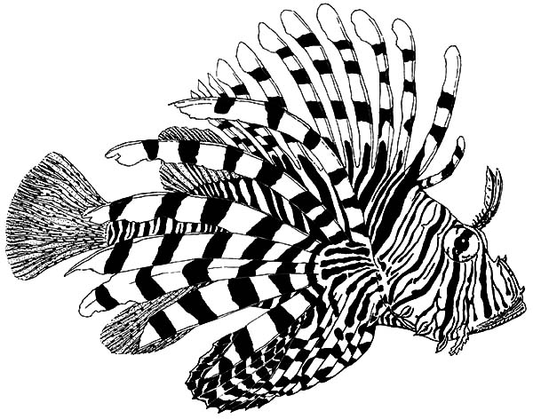lionfish coloring page lionfish swims along the edge of a coral reef coloring page lionfish page coloring