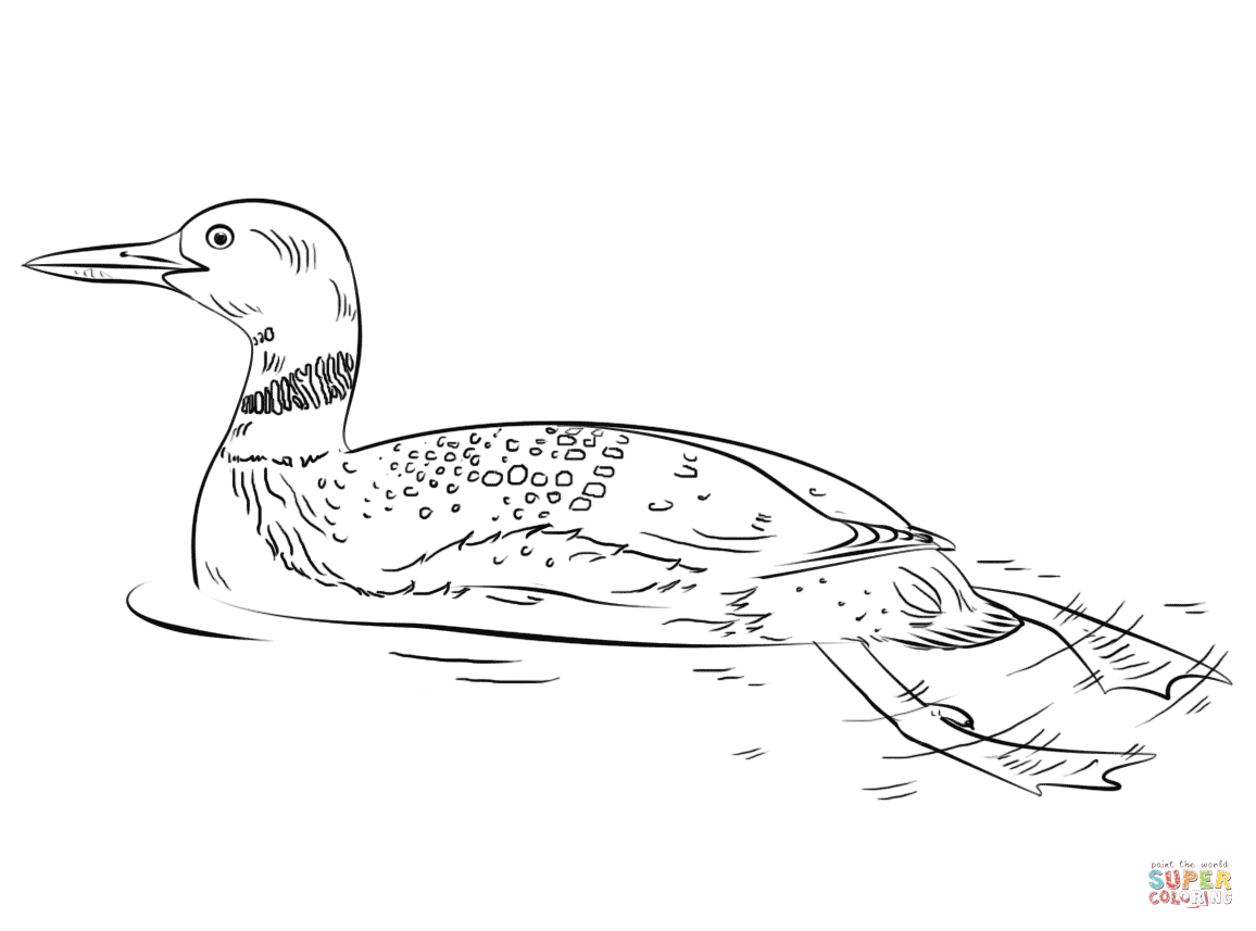 loon pictures printable common loon coloring page free printable coloring pages loon printable pictures