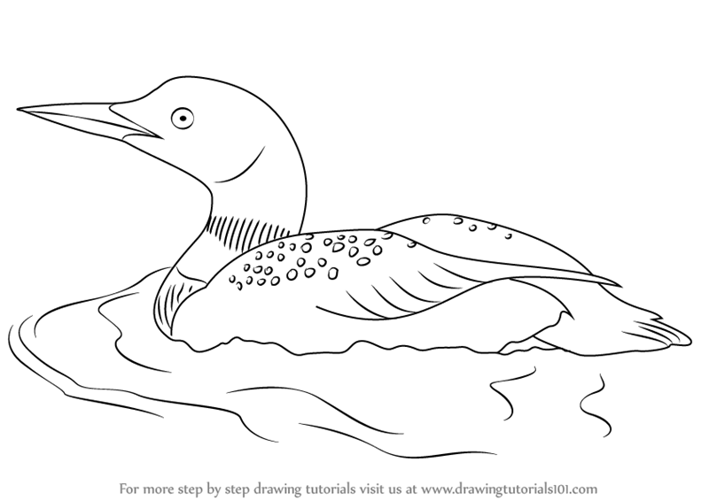 loon pictures printable common loon coloring page sketch coloring page printable pictures loon