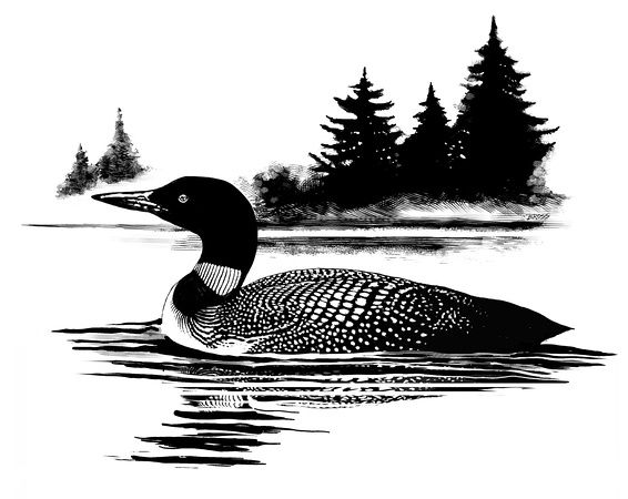 loon pictures printable common loon dot to dot printable worksheet connect the dots pictures printable loon