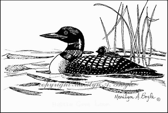 loon pictures printable emily sames home loon pictures printable